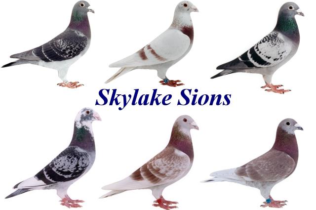 Sky Lake Sions Loft
